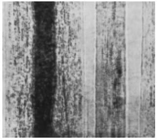 Longitudinal-View-500X-Camel-hair-fibre