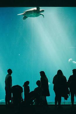 Monterey Bay Aquarium, California
