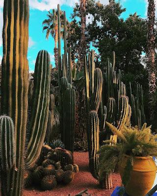Palmy, kaktusy, sukulenty
