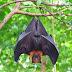 Γιατί οι νυχτερίδες κρέμονται ανάποδα;