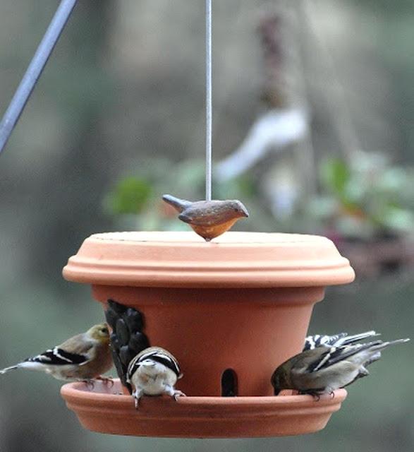 Φτιάξτε μια όμορφη ταΐστρα για τα πουλιά