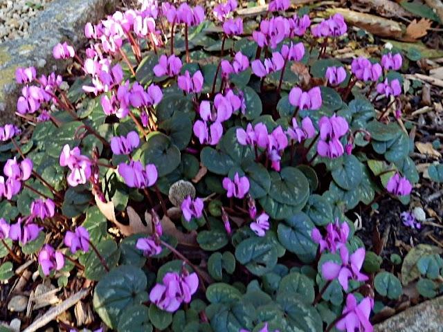 Flowers in Cornwall