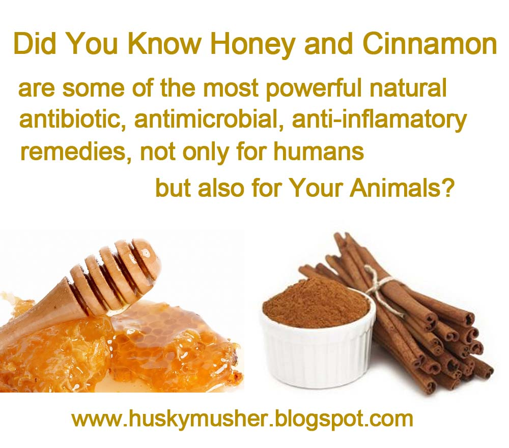 Halcyon Days: Cinnamon and Honey: Cure-All or Hoax?