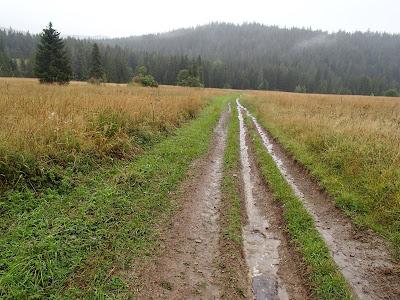 grzyby 2017, grzyby w sierpniu, grzyby na Orawie, grzyby po deszczu