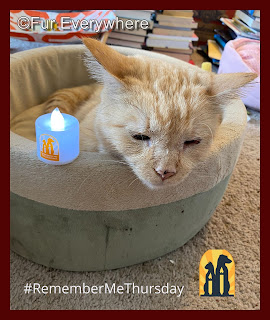 Carmine lights a #rememberMeThursday candle for all the animals still needing forever homes.