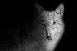 wolf wallpaper desktop  wolf wallpaper anime