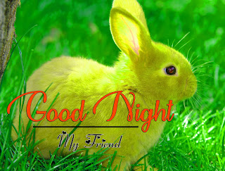 Latest Beautiful Good Night Wallpaper Free Download %2B2