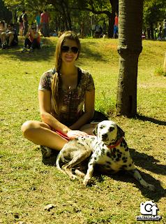 Adestrar cães - são paulo - dálmata