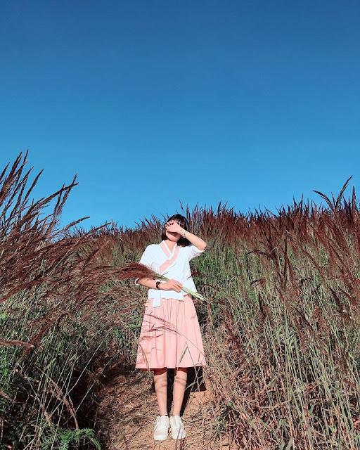 Đến với Đà Lạt hãy ngắm đồi cỏ hồng đuôi chồn đẹp tựa xứ Nhật Bản đẹp mê hồn 7