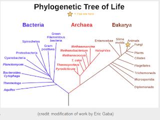 Árvore Filogenética de Carl Woese Textos de Biologia