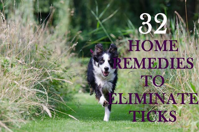 Home remedies to eliminate ticks from your pup, 32 amazing dog care tips