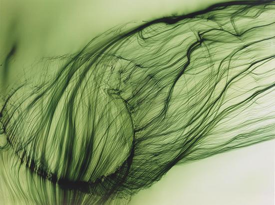 Wolfgang Tillmans  Freischwimmer 16, 2003 ink jet print 60 x 80 inches