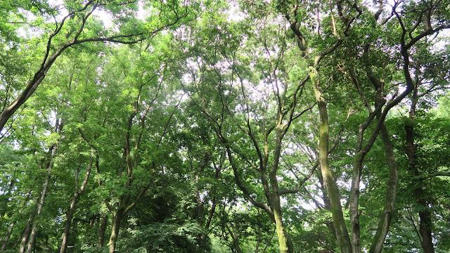 Rinshinomori Park trees