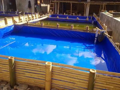 kolam terpal budidaya ikan lele