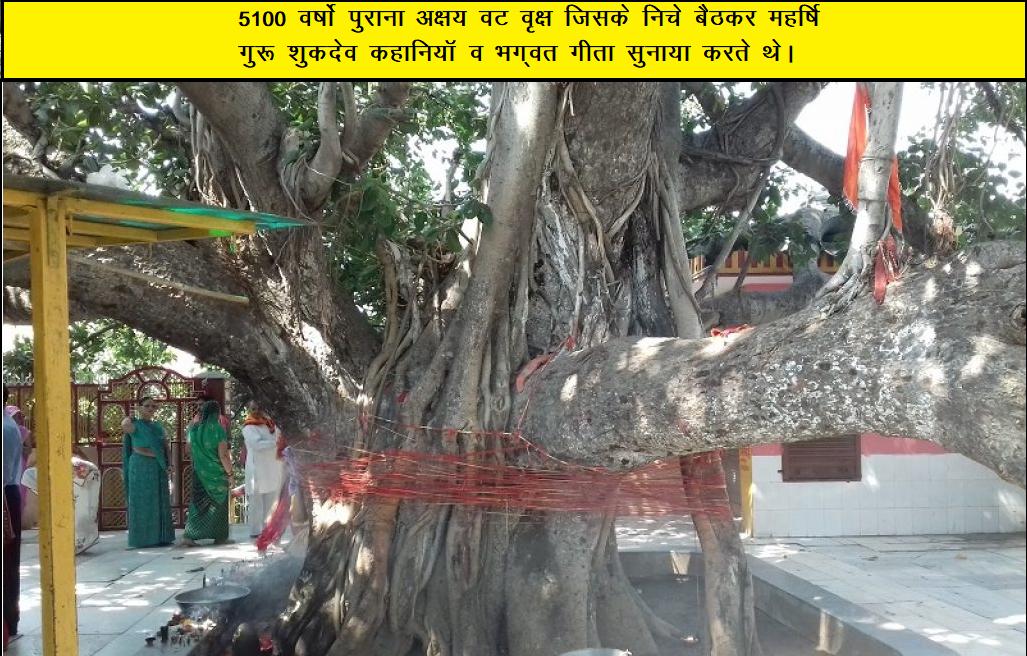 अक्षय वट वृक्ष  जिसके निचे महर्षि शुकदेव भगवद गीता व कहाँनिया सुनाया करते थे