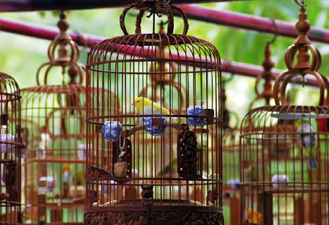 Beberapa Jenis Burung yang Mudah Dipelihara Pemula