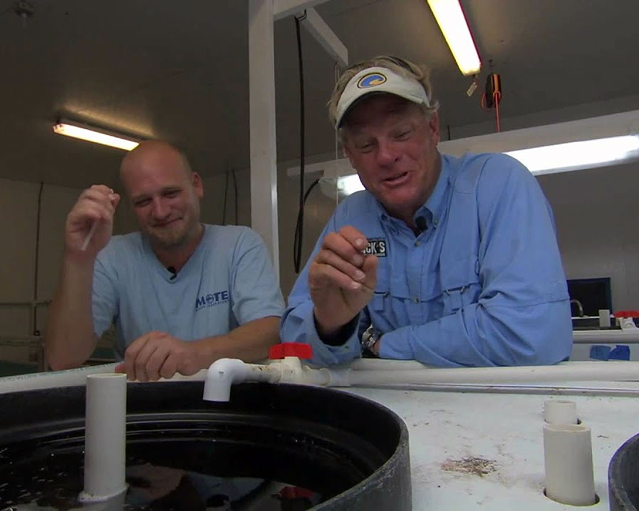 Capt Blair Wiggins Learning About Snook Larvae