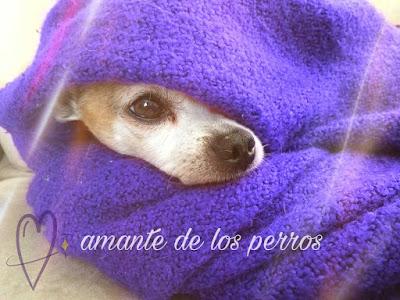 descargar imagenes de perros, imagen perros, imajenes de un perro, buscar imágenes de perros, buenas noches con perritos
