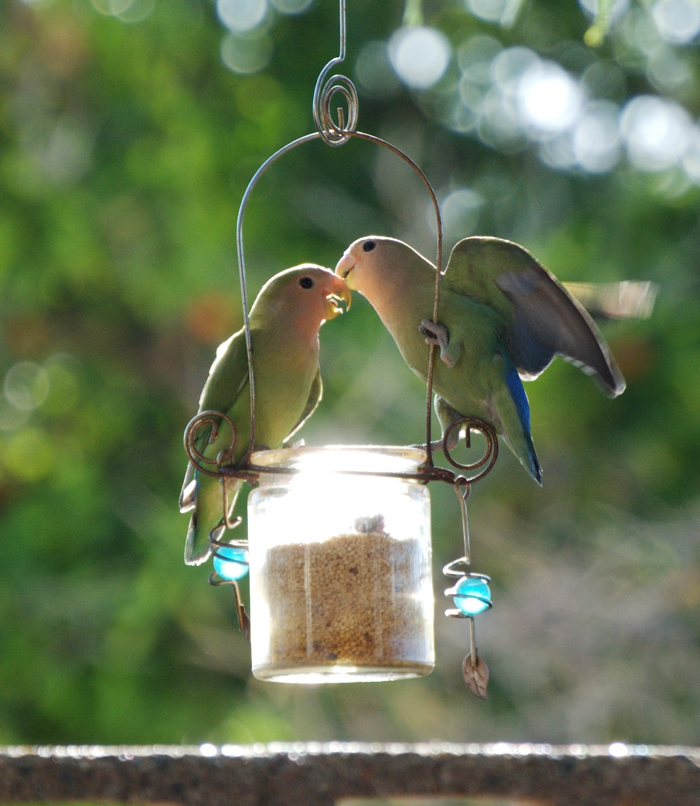 Captured Moments by LissC: Kissing Love Birds