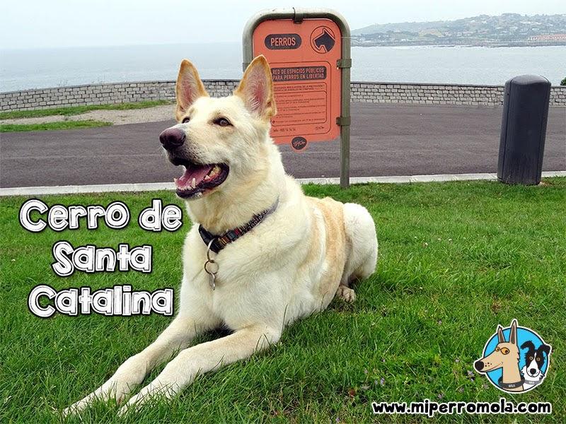 Can de Palleiro en el Cerro de Santa Catalina con Perros