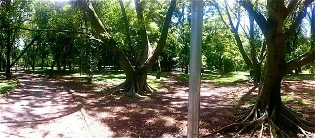Parque Ibirapuera - Pista de Cooper