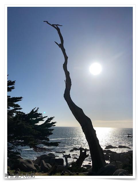 Monterey 17 miles drive 13
