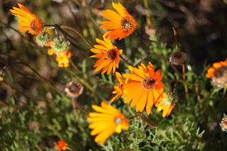 Namaqualand national park