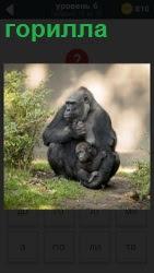 На тропинке в лесу сидит горилла с угрюмым видом и в ногах держит своего детеныша