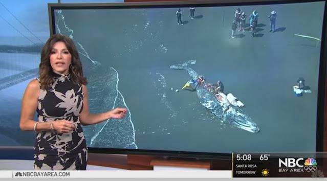 Τέσσερις φάλαινες σε παραλίες του Σαν Φρανσίσκο ξεβράστηκαν νεκρές (βίντεο)