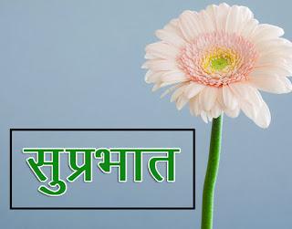 Flower Suprabhat Wallpaper Wallpaper Download