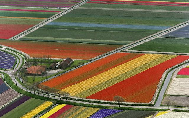 Velden met gekleurde bloemen