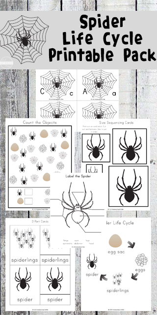 spider life cycle worksheets. Black Bedroom Furniture Sets. Home Design Ideas