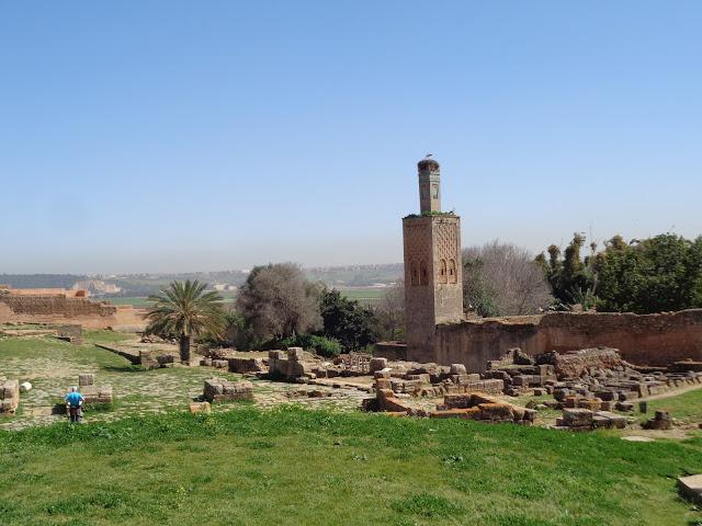 Bociany w Maroko
