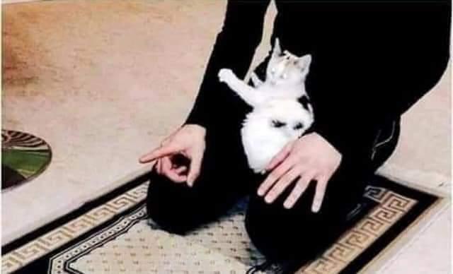 Apakah Shalat yang Dilewati Kucing Jadi Batal?