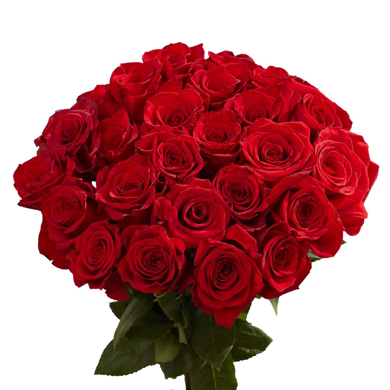 arti bunga mawar merah
