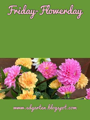 Dahlien in weiss, gelb und pink