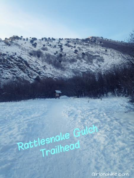 Rattlesnake Gulch, Millcreek Canyon, Hiking in Utah with Dogs