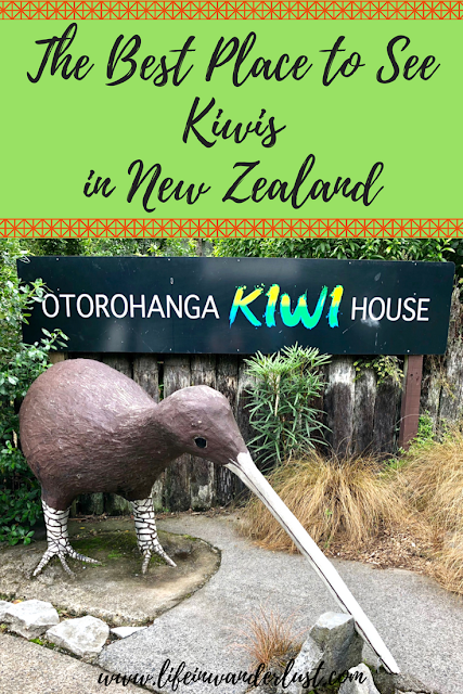 Kiwi House Otorohanga Best Place To See Kiwis