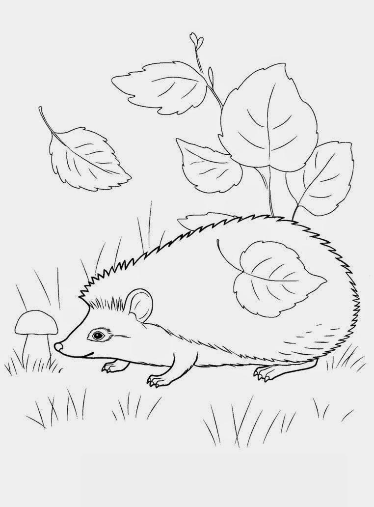 Картинка Раскраска Осень Для Детского Сада