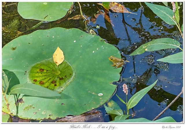 Black's Nook: ... I see a frog...