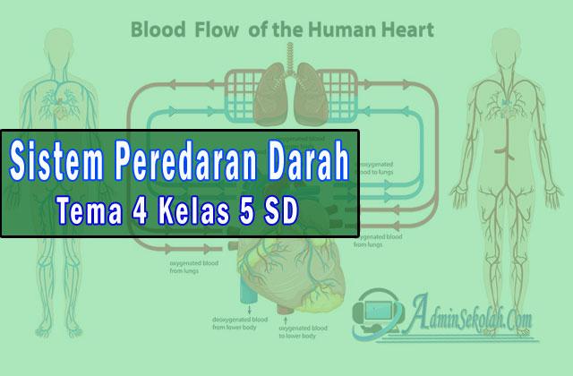 Materi IPA Sistem Peredaran Darah Tema 4 Kelas 5 SD Kurikulum 2013