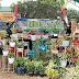 Berkat Program Kampung Sehat, Omset Penjual Tanaman Hias di Dompu Meningkat