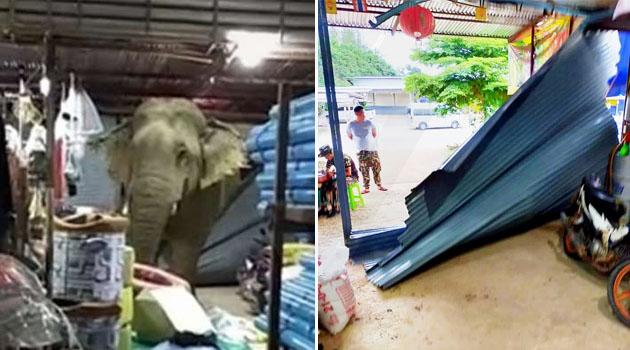 Tak tahan nafsu, gajah pecah masuk gerai & rembat lebih 10 buah durian
