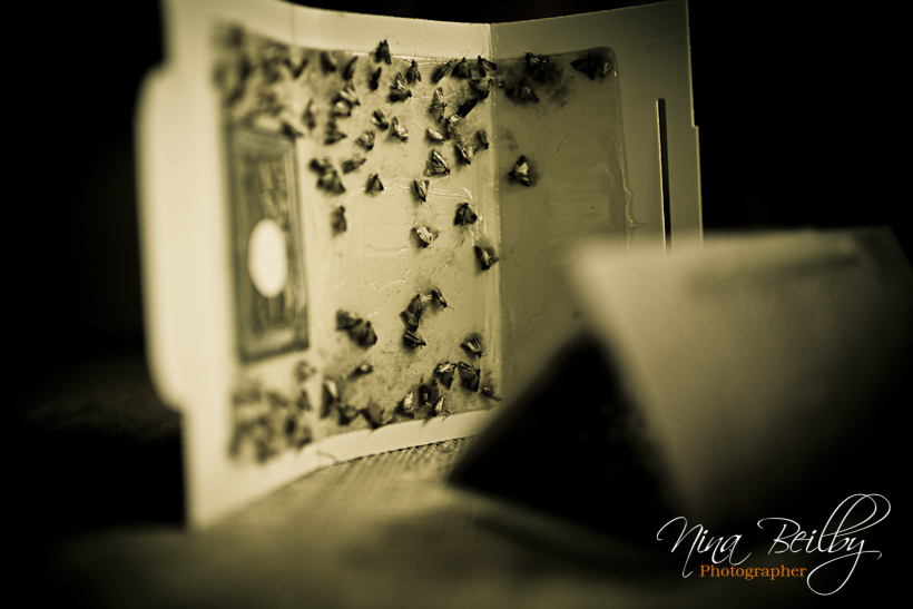 Tutorial] How To Get Rid Of Pantry Moths (Pictures)   How To