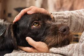 expressão facial em cães