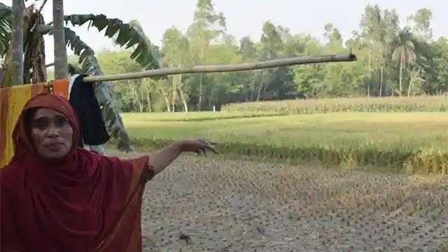 পলাশবাড়ীতে অসহায় নারীর ধান কেটে নিয়ে গেলো কথিত যুবলীগ নেতা ঠান্ডা