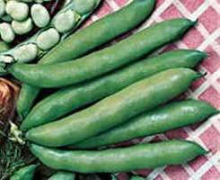 Foto de habas color verde