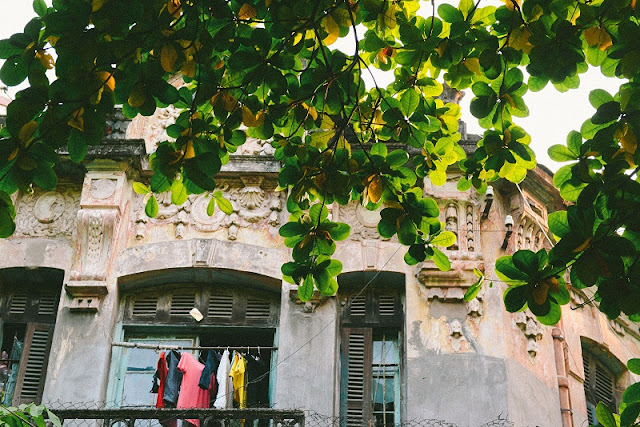 Hanoi in young leaf season 2