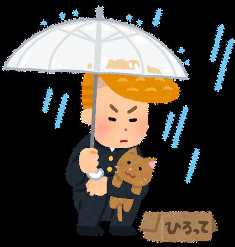 雨と不良と猫