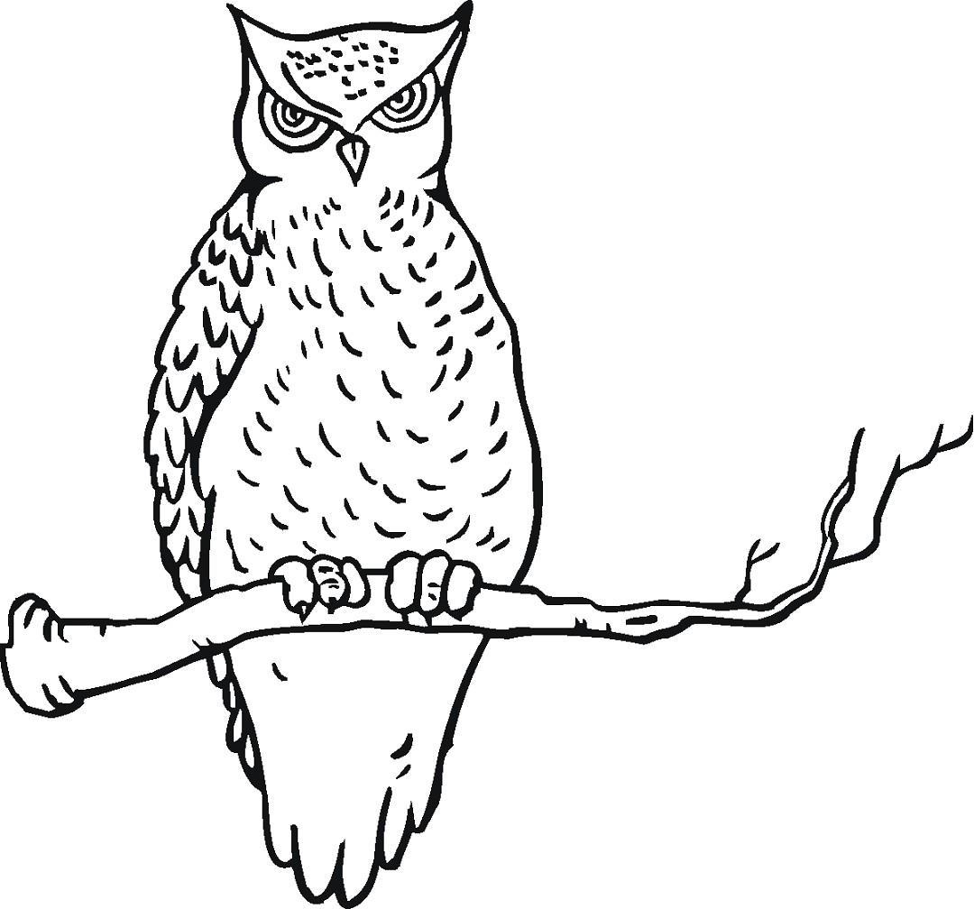 Download 55 Foto Gambar Burung Hantu Hitam Putih  Paling Bagus Free